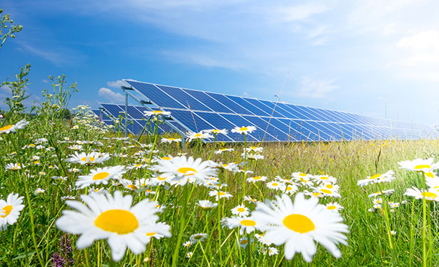 Cooperative Solar Site Development